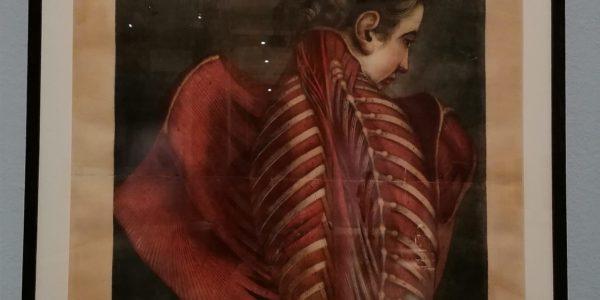 Mostra: sublimi anatomie, dove il corpo è arte