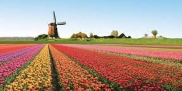 Olanda: la rotta dei tulipani, spettacolo unico della natura