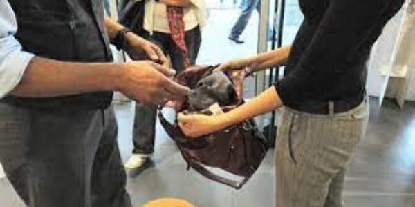 Ciociaria /Due sorelle di Frascati sorprese a rubare in un centro commerciale a Valmontone: occhili, borse e vestiti firmati
